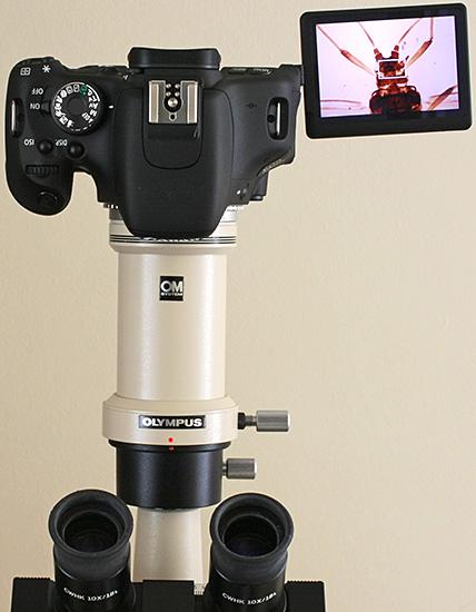 Canon EOS 600D on Olympus CH-2