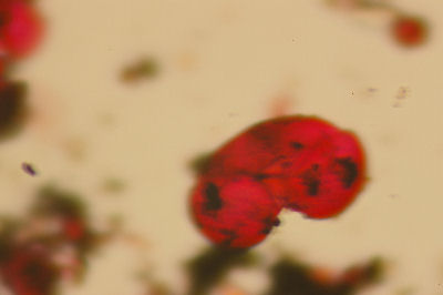 Red pollen