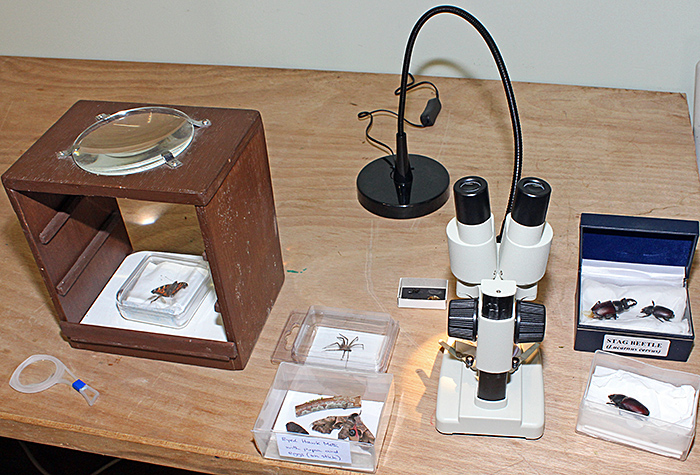 Arthropods and magnifiers