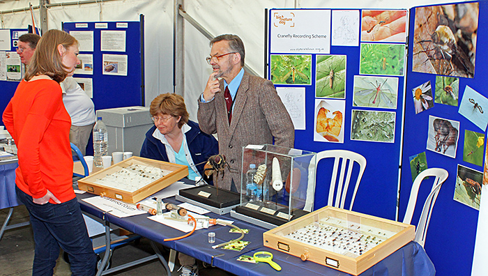 Dipterists Forum stand