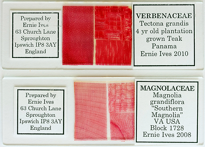 Two wood-section slides by Ernie Ives