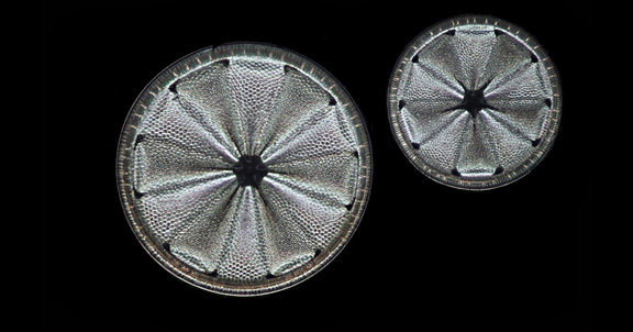 Fossil diatoms (home slider)