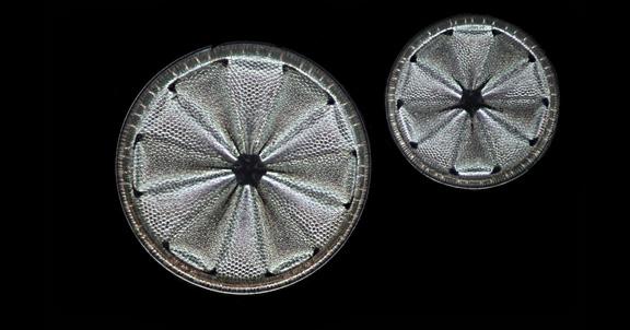 Fossil diatoms (home slider)
