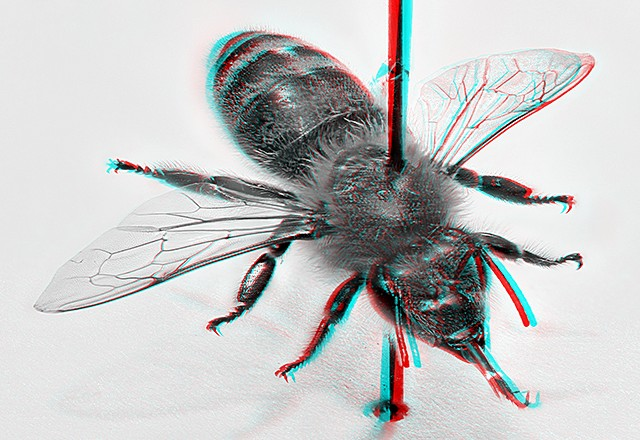 Stereoscopic honeybee photo for red-cyan anaglyph glasses