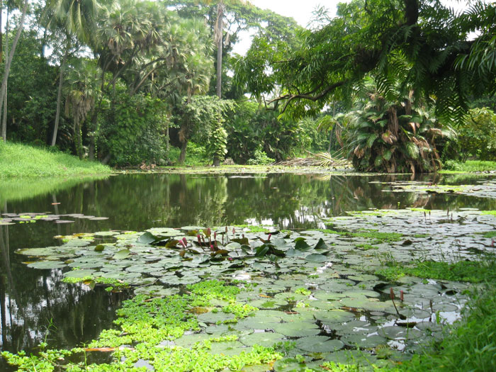 An Indian pond-hunter's paradise