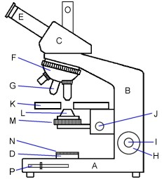 Diagram of a modern microscope