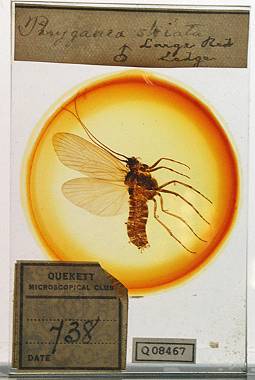 Oversized insect mount