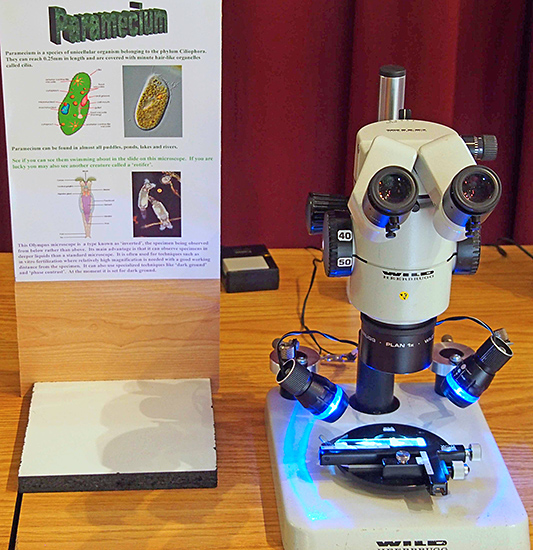 Paramecium and Wild stereomicroscope
