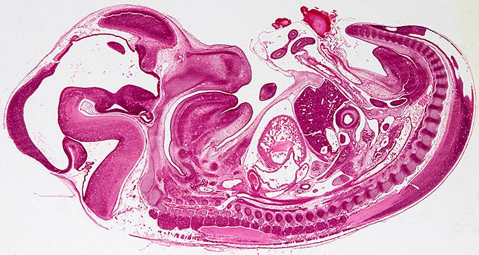 2015 Webmaster's blog – Quekett Microscopical Club