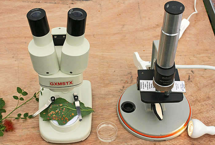 Simple microscopes