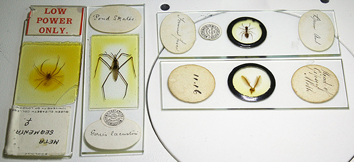 Some of Dennis Fullwood's collection of arthropod slides