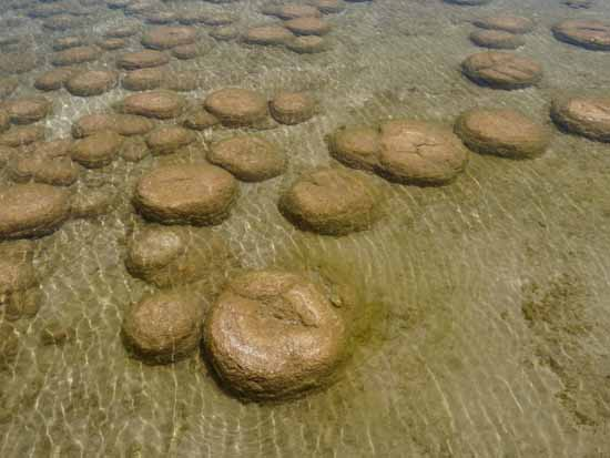 Thrombolites in Lake Preston