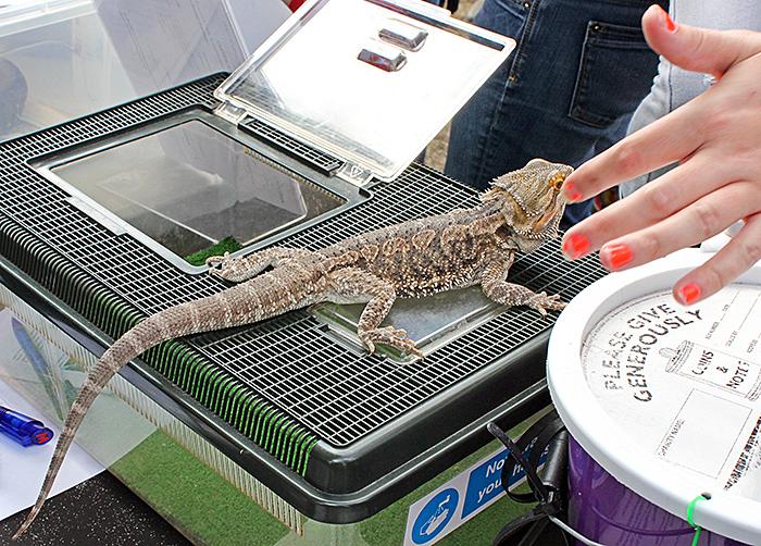 Touching a lizard