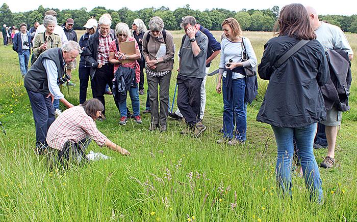 Uncut grass on the plain
