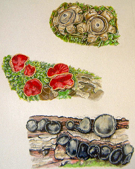 Lichen by Christine Brodie