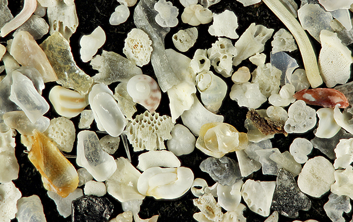 Foraminiferous sand from Dog's Bay