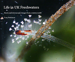 Life in UK freshwaters, by Tony Pattinson