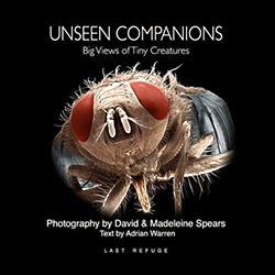 Unseen Companions: Big Views of Tiny Creatures: Spears