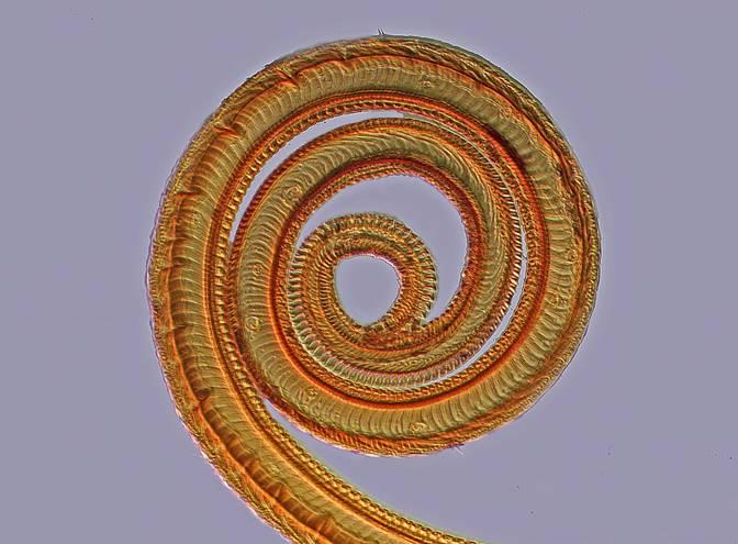 Butterfly proboscis (VOILA)