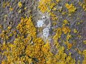 Lichen on a wall