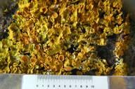 Lichen on a wall