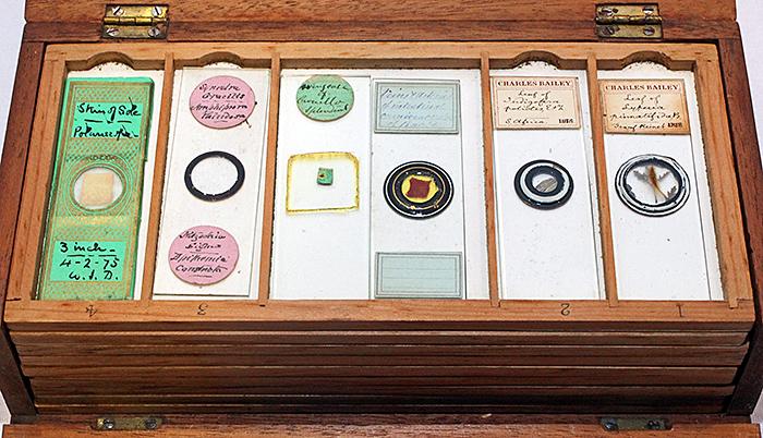 Wooden box of prepared slides