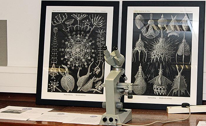 Nigel Williams' exhibit