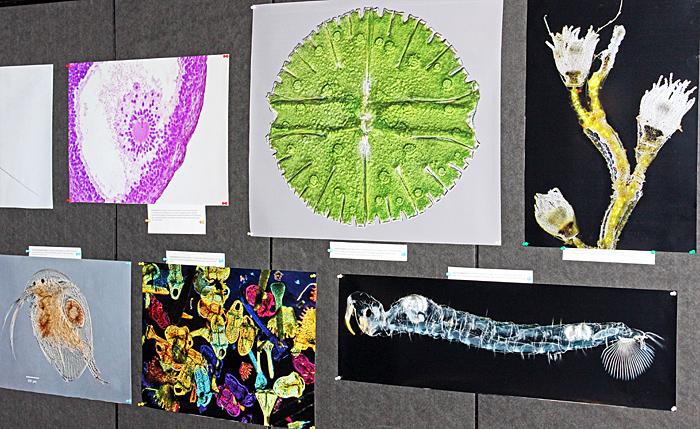 Photomicrographs on display