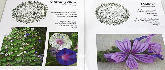 Pollen drawings