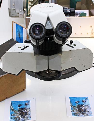Ray Sloss's stereo viewer