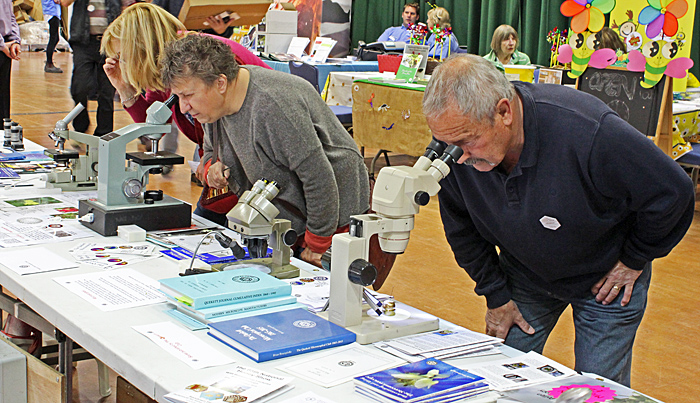 Visitors using stereo and compound microscopes