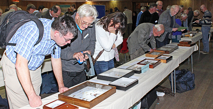 Visitors examining the displays