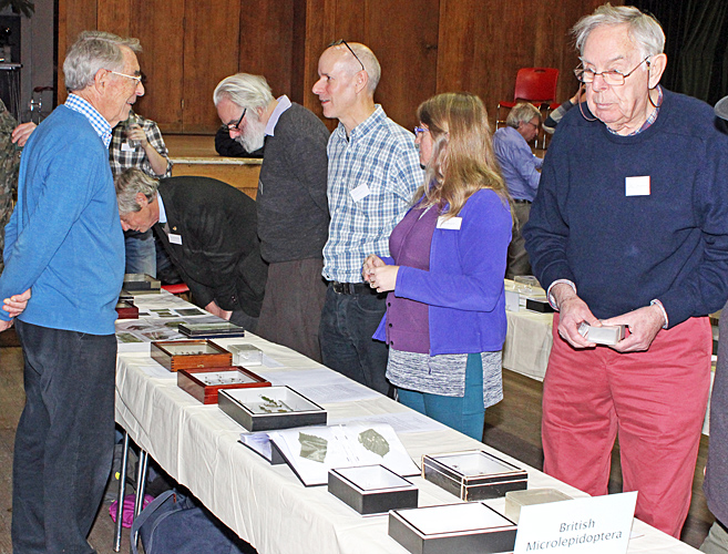 Visitors examining the Microlepidoptera displays
