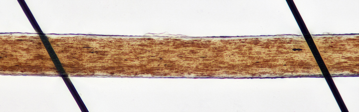 Carbon fibres and a brown human hair