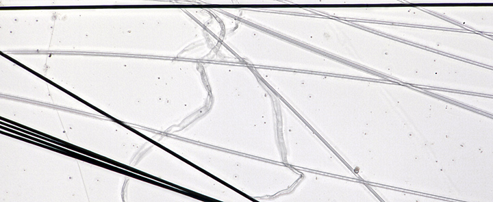 Carbon fibres, glass fibres and spider silk (compound microscope, bright-field illumination)