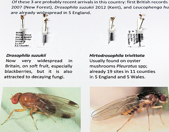 Insects from Windsor