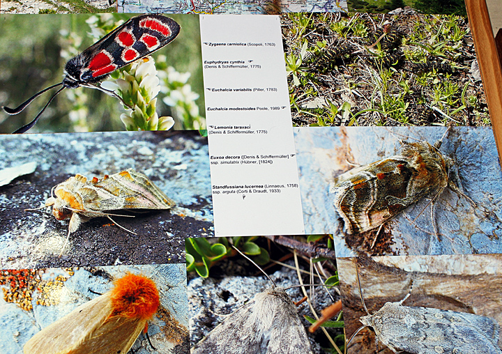 Photographs of insects
