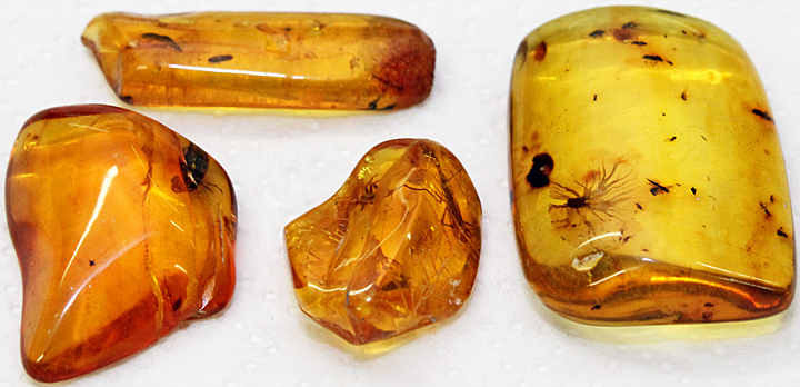 Insects in 40-million year old Baltic amber