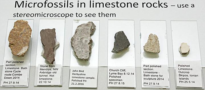 Microfossils in limestone rocks