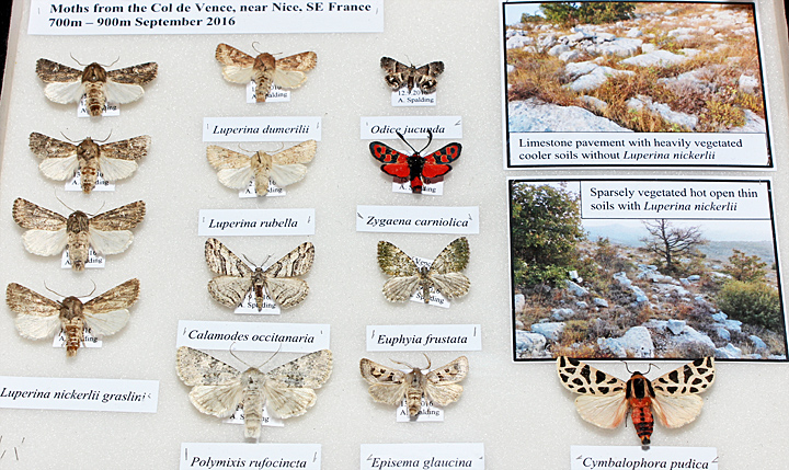 Moths from Nice
