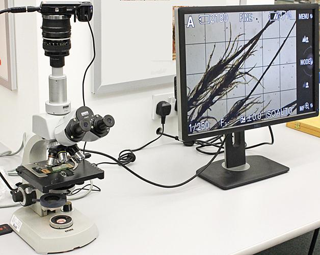 Zeiss Standard microscope for viewing Quekett slides