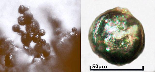 Micrometeorites and a single micrometeorite