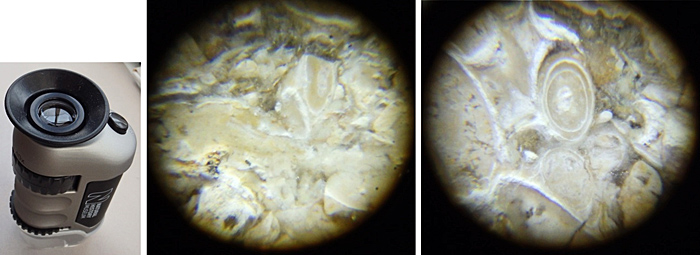 Dorset microfossils under pocket microscope