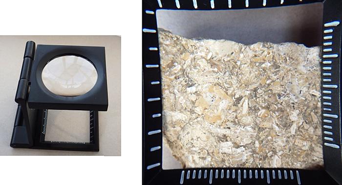 Dorset microfossils under simple magnifier