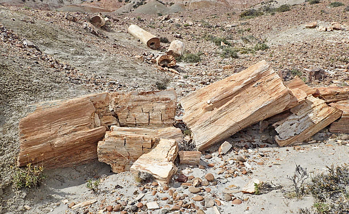 Petrified tree trunks