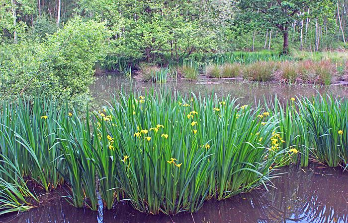Hookhamslade pond