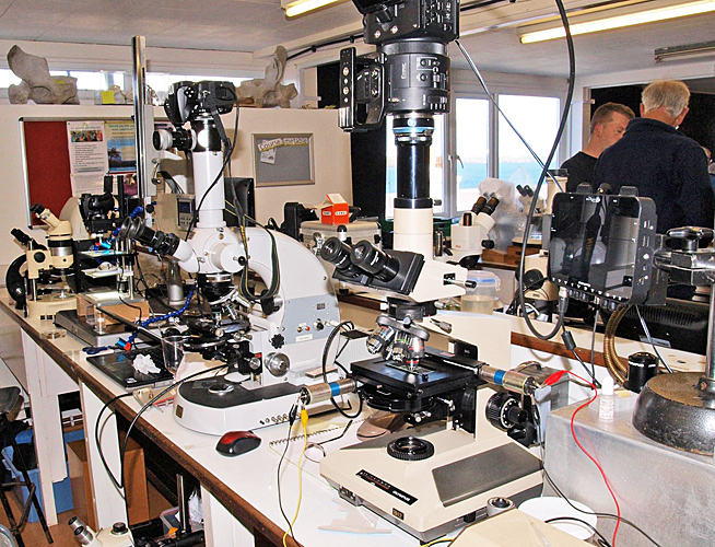 Microscopes and cameras