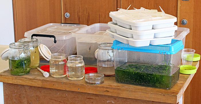 Pond life samples