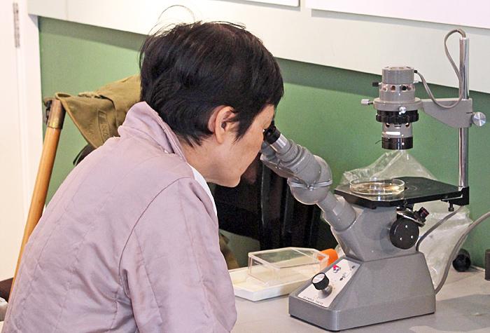 Olympus CK inverted microscope