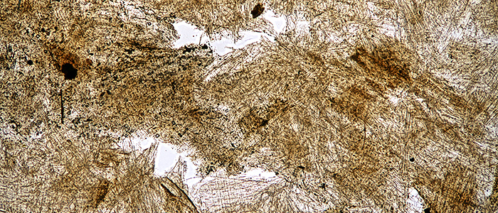 Wasp-nest paper (bright-field)